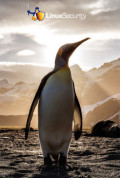 Linux 5.9: Not a game-changer, but a good, solid Linux kernel